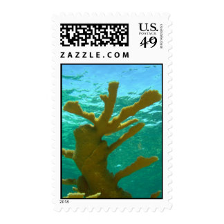 Acropora coral postage stamp