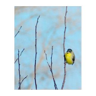 Acrylic Art - Perching Finch
