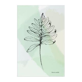 """Acrylic Wall Art, 24"""" x 36""""- Sensitive Fern Acrylic Print"""