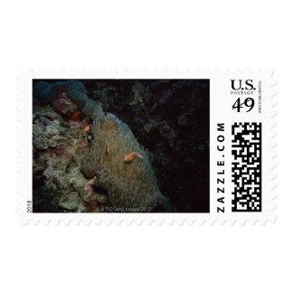 Actinia Stamp