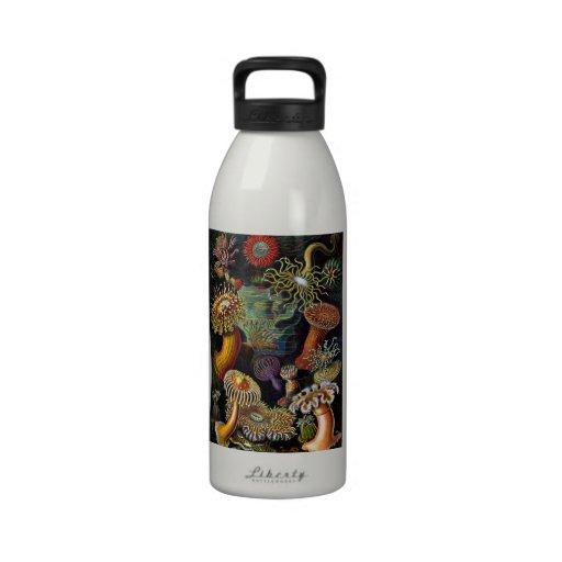 Actiniae - anémonas botella de beber