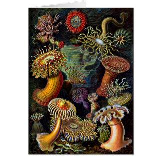 Actiniae - Anemones Greeting Card