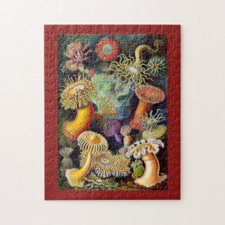 Actiniae by Ernst Haeckel Puzzles