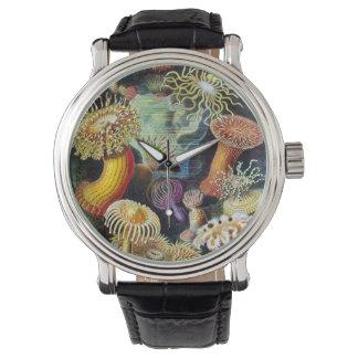 Actiniae by Ernst Haeckel Wrist Watch