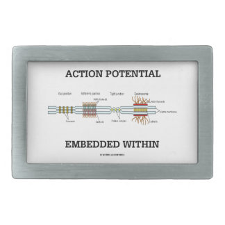 Action Potential Embedded Within (Cell Junctions) Belt Buckle