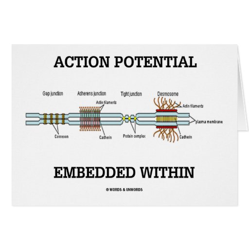 Action Potential Embedded Within (Cell Junctions) Greeting Card