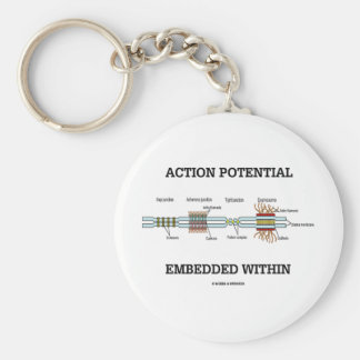Action Potential Embedded Within (Cell Junctions) Key Chains