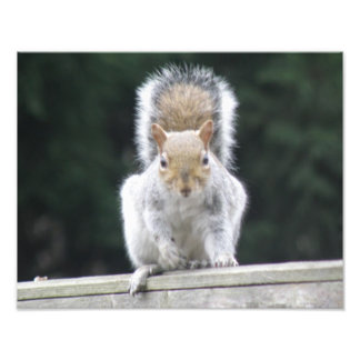 Action Squirrel Ready to Leap Photo Print