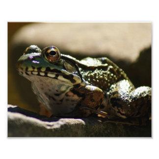 Actitud 10 x de la rana impresión fotográfica 8