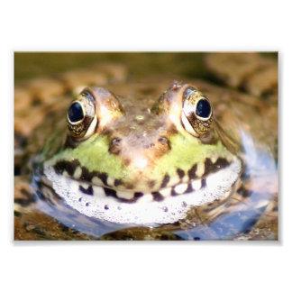 Actitud 7 x de Froggie impresión fotográfica 5