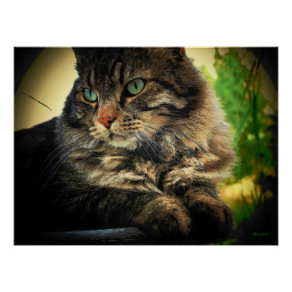 Actitud bonita del gatito por el djoneill póster