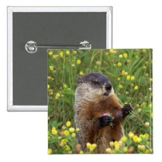 Actitud de Groundhog Pin Cuadrado
