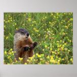 Actitud de Groundhog Póster