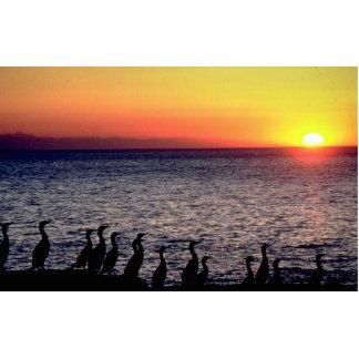 Actitud de los cormoranes en costa del Océano Pací Esculturas Fotograficas