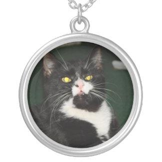 Actitud del gato de Charli Pendiente