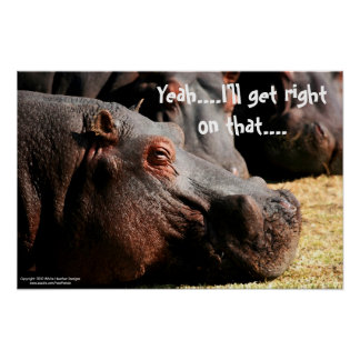 """Actitud del hipopótamo """"que conseguiré derecho en  póster"""