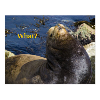 Actitud del león marino tarjeta postal