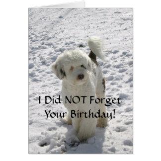 Actitud del perro/cumpleaños tardío tarjeta de felicitación