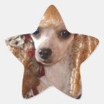 Actitud del perro del amor del caniche del calcomanía forma de estrellae