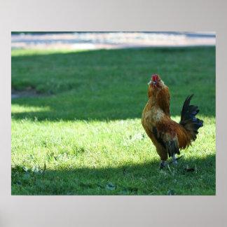 """Actitud"", gallo Impresiones"