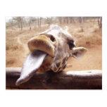 Actitud linda por la jirafa postal