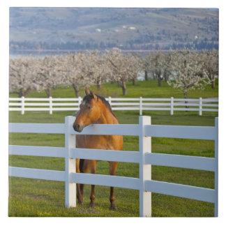 Actitudes del caballo por la huerta de cereza de c azulejo cuadrado grande