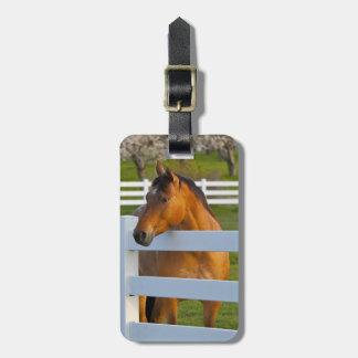 Actitudes del caballo por la huerta de cereza de c etiqueta de maleta