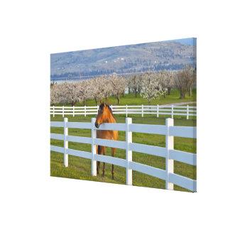 Actitudes del caballo por la huerta de cereza de c impresiones en lona