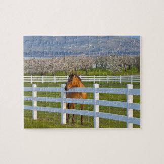 Actitudes del caballo por la huerta de cereza de c rompecabeza con fotos