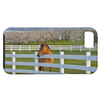 Actitudes del caballo por la huerta de cereza de funda para iPhone 5 tough