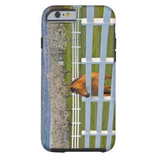 Actitudes del caballo por la huerta de cereza de funda para iPhone 6 tough