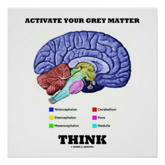 Activate Your Grey Matter Think (Anatomical Brain) Poster