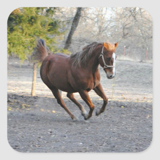 Active Horse Stickers