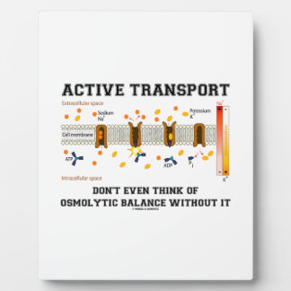 Active Transport Don't Think Of Osmolytic Balance Plaque