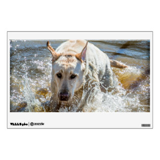 Active Yellow Labrador Splashing: Pet Photography Wall Sticker