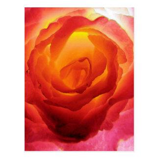 Acuarela color de rosa bicolor roja y amarilla tarjetas postales