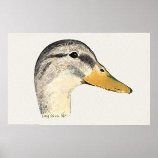 Acuarela de la gallina del pato del pato silvestre póster