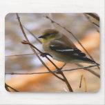 Acuarela del Goldfinch Tapete De Raton