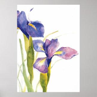 Acuarela floral del iris póster