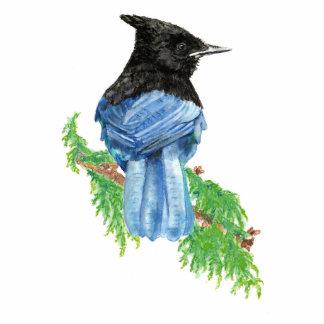 Acuarela Jay estelar, pájaro, colección de la natu Fotoescultura Vertical