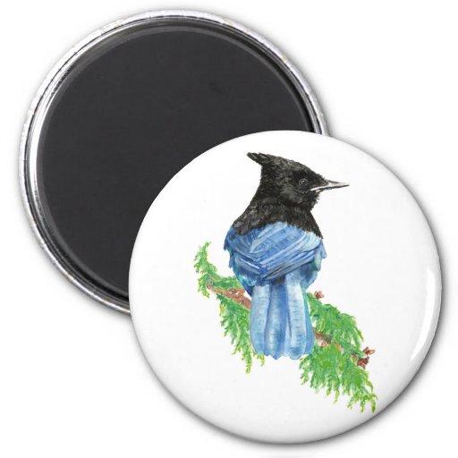 Acuarela Jay estelar, pájaro, colección de la natu Iman De Frigorífico