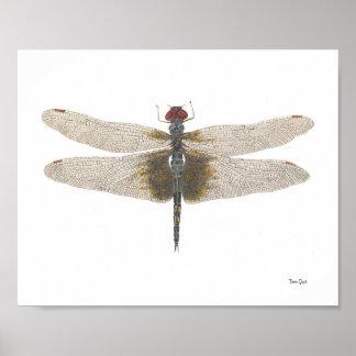 Acuarela negra masculina de la libélula de los Sad Póster