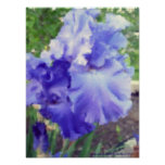 Acuarela púrpura del iris impresiones