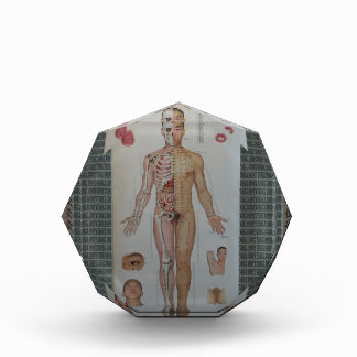 Acupuncture points full body front wall art award