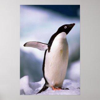 Ad?lie Penguin Poster
