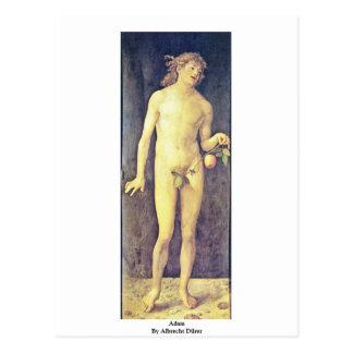 Adam By Albrecht Dürer Postcard
