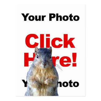 Add A Squirrel Custom Photo Postcard