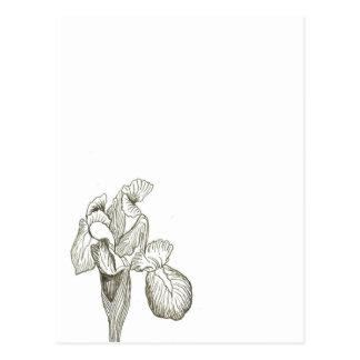 Add Text to Elegant Iris Postcard