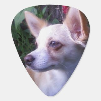 """Add-Your-Own Photo"" Guitar Pick"