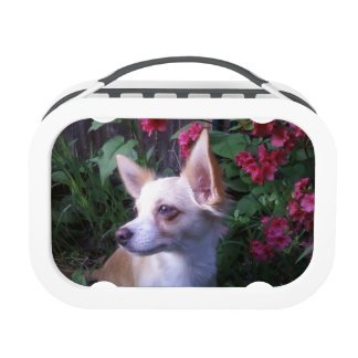 """""""Add Your Own Photo"""" Lunch Box"""